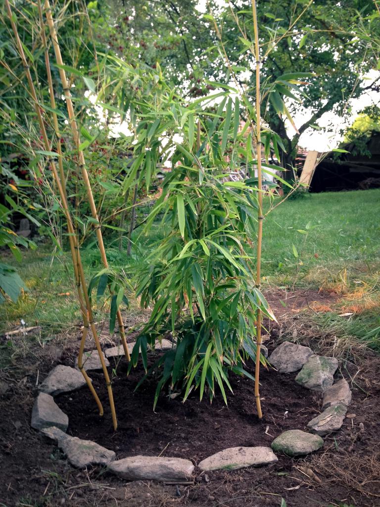 Bambusy zaházeny a okolí upraveno