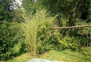 Zátiší z bambusu