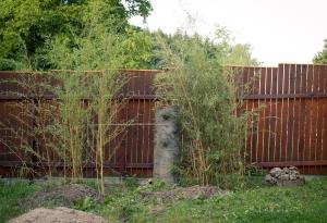Bambusový živý plot