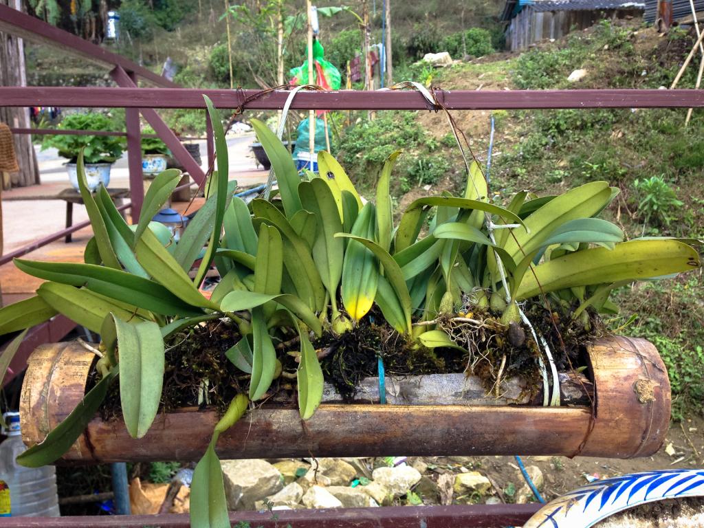 Truhlík z bambusu