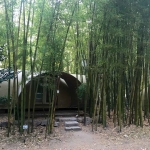 Bambusy v kempu le Pradal