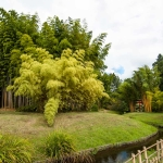 Mezi bambusy protéká potok