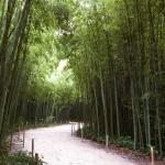 Cesta v zadní části bambusária Prafrance