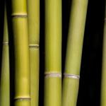 Detail zelených stébel