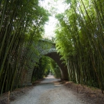 Vstupujeme do bambusária Prafrance u Anduze