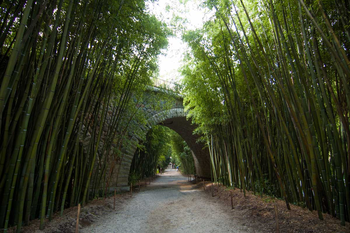 Картинки по запросу Bamboo Prafrance, Anduze