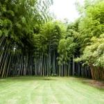 Prostor krásně vymezený bambusem
