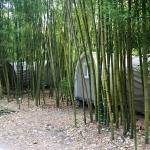Bambusy v le Pradal kolem bungalovů