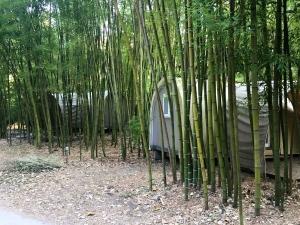 Bambusy kolem bungalovů v kempu le Pradal