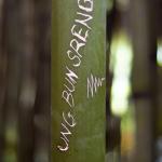 Jméno na bambusu