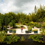 Zahrada s vodními rostlinami
