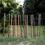 Druhy bambusů vedle sebe